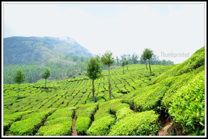 greenery2